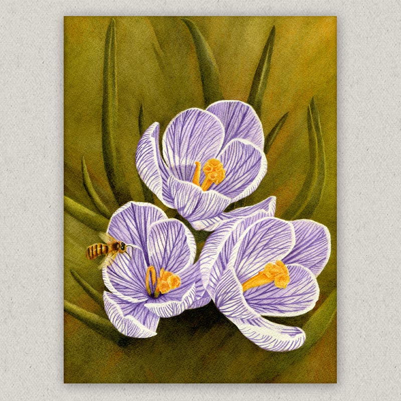 bee crocus