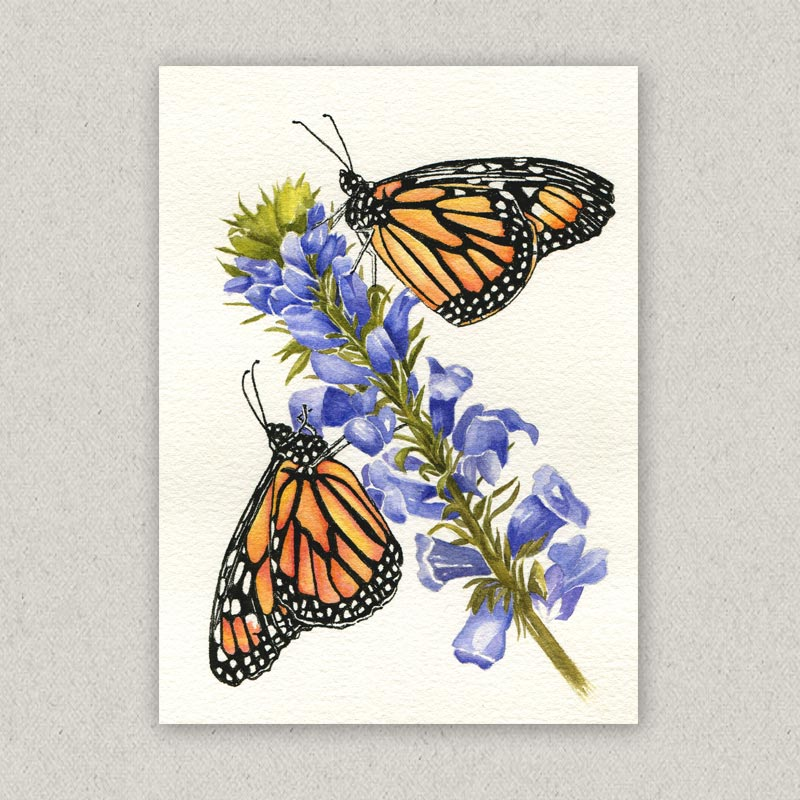 monarchs and purple flower